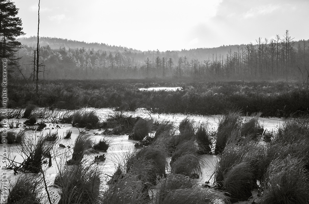 Marsh, East Branch, Hinsdale, MA