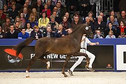 448 - Google<br /> KWPN Stallion Selection - 's Hertogenbosch 2014<br /> © Dirk Caremans