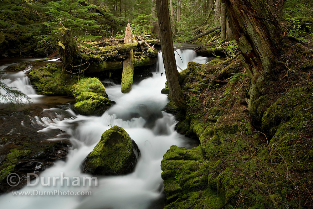 Panther Creek in the Wind River Experimental Forest, Oregon.