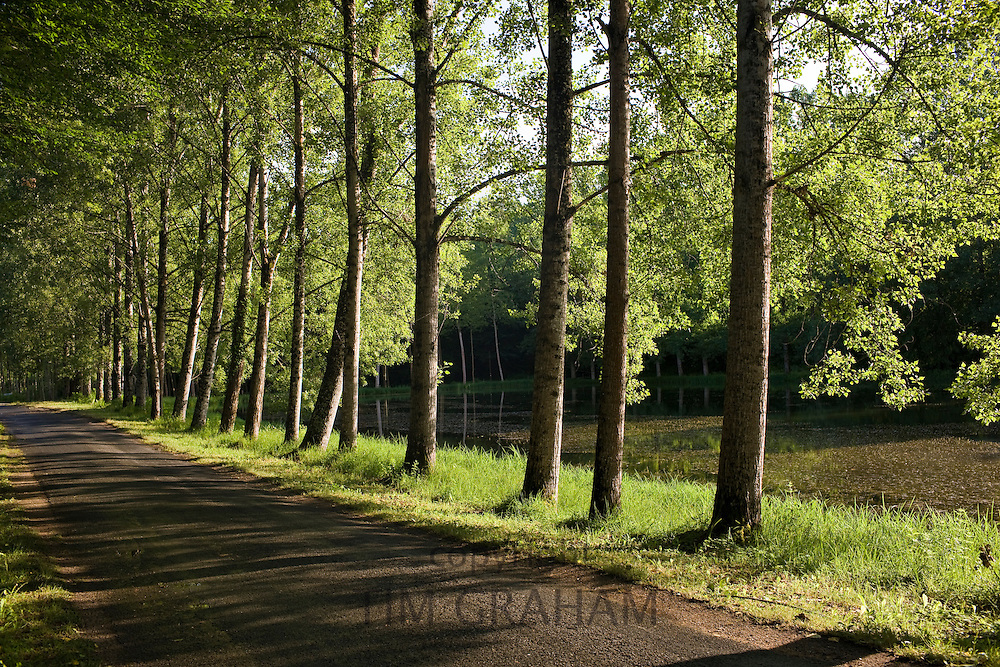 Tree lined avenue near St Leon sur Vezere in the Perigord Noir region of France
