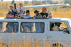 Tourists Viewing Animals