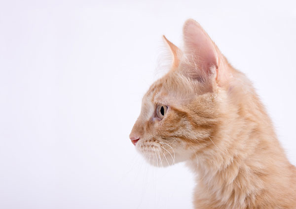 The animals in this portfolio were all photographed while they were waiting to be adopted in the Tri-Cities, WA. The cats are all featured in my book Shelter Cats while the puppies were photographed as possible subjects for my Shelter Puppies book.
