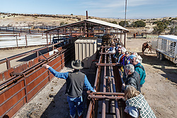 Ecotourists learning about bison from Ranch Manager at bison pens, Ladder Ranch, west of Truth or Consequences, New Mexico, USA.