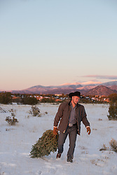 cowboy with a tree on a mountain range
