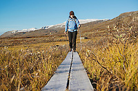 Female hiker walks along frost covered wooden walkway on Kungsleden trail, Lappland, Sweden