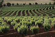Seppeltsfield Vineyard in the prolific wine-growing region of Barossa Valley, South Australia. The valley marked the endpoint of the Pentax Solar Car Race.