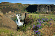 Summer wildflowers, including lupine, grow on the basalt cliffs overlooking Palouse Falls in Washington state. The waterfall is 200 ft. (61 m) in height and is fed by the Palouse River.