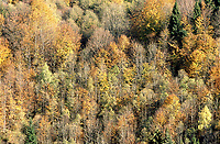 Autumn trees   Photo: Peter Llewellyn