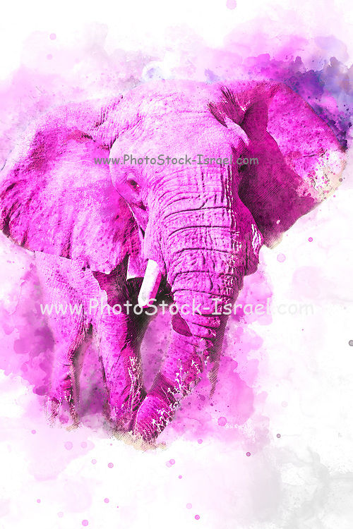 Digitally painted image of a pink African elephant on white background