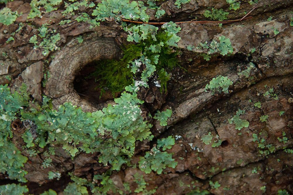 Bark and Lichen, Holland, Massachusetts, US