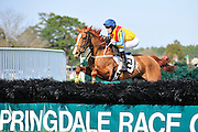 27 March 2010 : Paddy Young and WORLD AWAY head into an early hurdle in the Sport of Queens Maiden Hurdle race.
