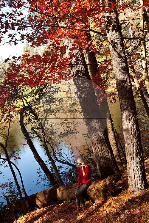 Autumn foliage at the home of author and poet Carl Sandburg in Flat Rock, NC