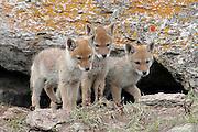 Photos from Spring Yellowstone Photo Tour