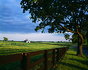 Pasture and stable of Brookside Farms with thoroughbreds, Steele Road, Woodford Country, Kentucky.