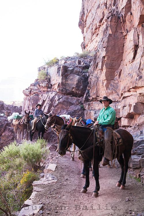 Mule train along the South Kaibab Trail. Grand Canyon National Park, AZ.