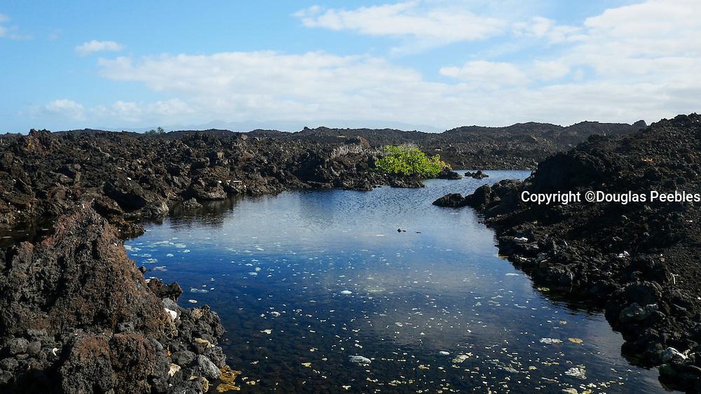 Kohala Coast, Island of Hawaii