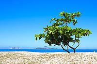 beautiful tree on ipanema beach in rio de janeiro brazil