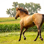 20180811 Voelker Horses