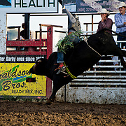 Tracer Croy on Red Eye Rodeo Buffalo at the Darby Broncs N Bulls event Sept 7th 2019.  Photo by Josh Homer/Burning Ember Photography.  Photo credit must be given on all uses.