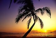 Sunset with palm tree, Maui<br />