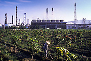 Farmer tends to her Guava plantation in the shadow of the China Petroleum Co. which is blamed for serious air, water and soil pollution, Kaoshiung, Taiwan.