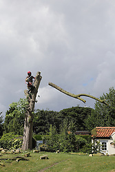 Branch being cut off a tree