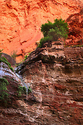 Elves Chasm waterfall in Grand Canyon National Park.