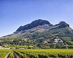 March 19, 2011 - Western Cape, South Africa - The celebrated vineyards of the Western Cape province in the Banhoek Valley, near Stellenbosch, with the majestic Drakenstein mountains in the background, is a favorite tourist destination. (Credit Image: © Arnold Drapkin/ZUMAPRESS.com)