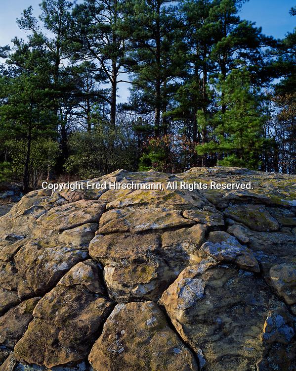 Turtle Rocks with polygonal joint pattern on Hartshorne Sandstone and Shortleaf Pine forest, Petit Jean State Park, Arkansas.