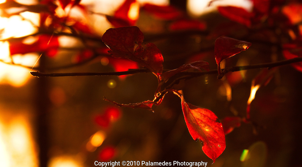 The magic of fall captured in a single moment.