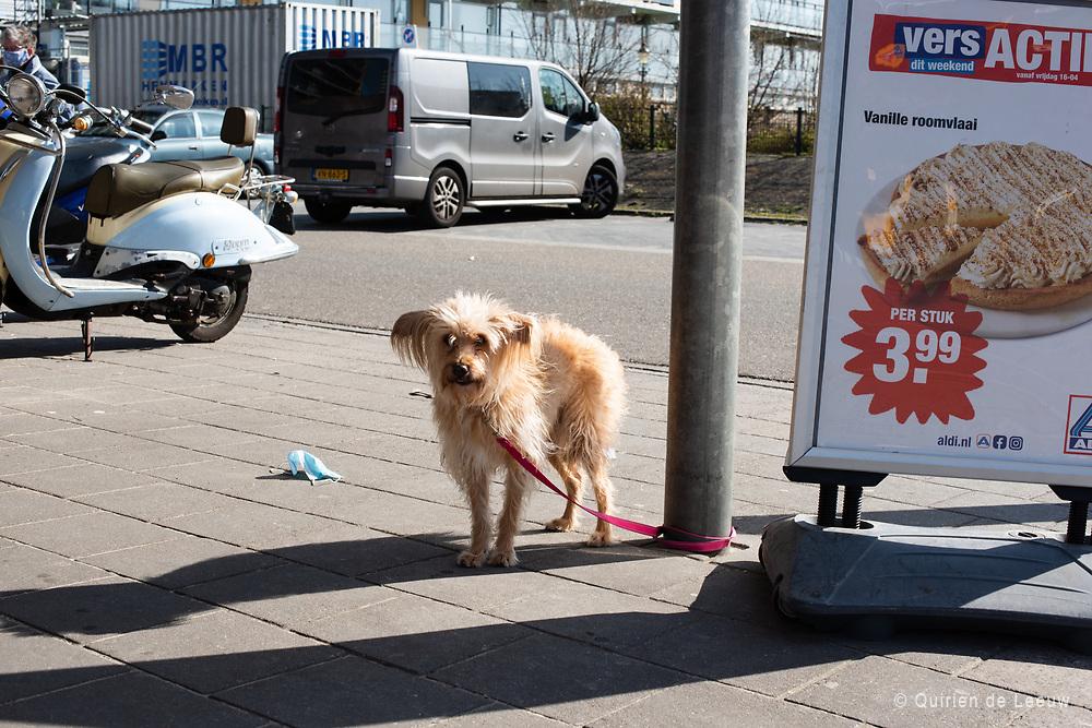Hond wacht op baas, Aldi supermarkt