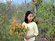 A young Kayah ethnic minority girl collecting plants for a religious ceremony on 22nd March 2016 in Kayah State, Myanmar