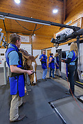 At the University of Pennsylvania School of Veterinary Medicine's New Bolton Center's Hospital for Large Animals on 21 December in Unionville, Pa. Photograph by Jim Graham