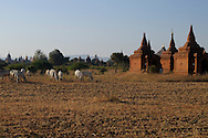 Burma/Myanmar, Bagan. Temples of Bagan - one of the most popular historical sites and tourist destinations in Myanmar.