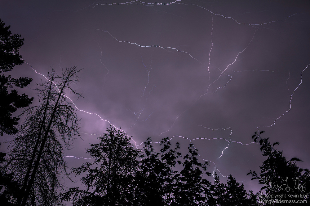 Several lightning strikes light up the sky over a forested area of Snohomish County, Washington.