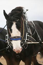 British National Ploughing Championships 2018