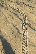 hermit crab tracks on beach in front of Ika Lahi Lodge, Hunga Island, Vava'u, Kingdom of Tonga, South Pacific