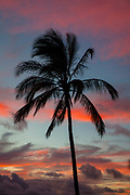 Coconut Palm Tree, Sunset, Kaneohe Bay, Oahu, Hawaii