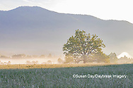 66745-04904 Sunrise and fog Cades Cove Great Smoky Mountains National Park TN