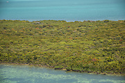 Red mangrove dominates the nothern key islands in Biscayne Bay National Park, Florida.