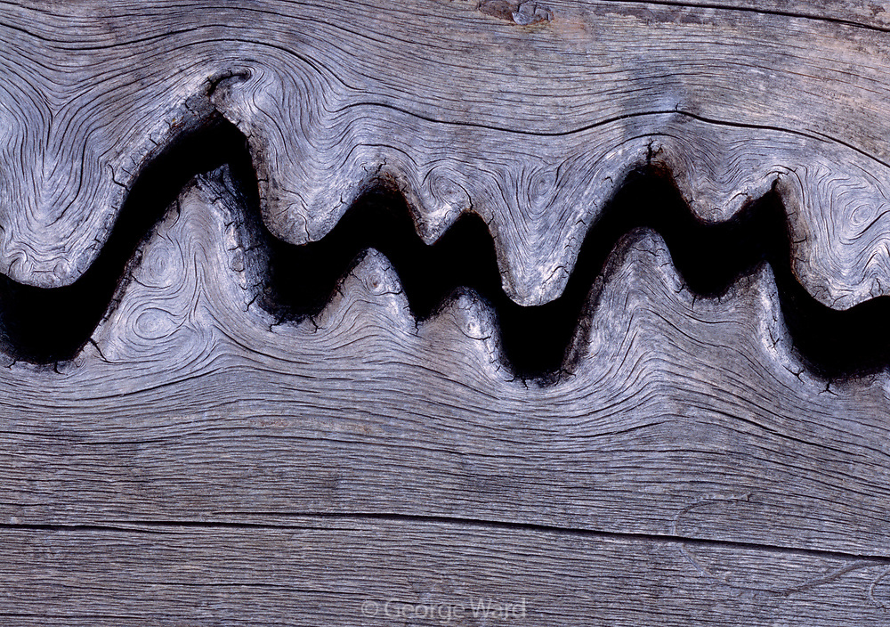 Weathered Crack in Engelmann Spruce, Lizard Head Wilderness, San Juan National Forest, Colorado