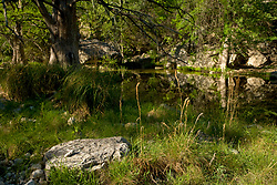 Stock photo of a shaded area along a small river in the Texas Hill Country