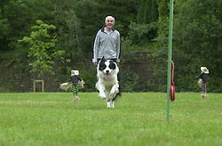 Eddie Sander with his Dogs Jackson and Inka<br /><br />18 June 2004<br /><br />Copyright Paul David Drabble<br /> [#Beginning of Shooting Data Section]<br />Nikon D1 <br /> Focal Length: 116mm<br /> Optimize Image: <br /> Color Mode: <br /> Noise Reduction: <br /> 2004/06/18 09:22:40.5<br /> Exposure Mode: Manual<br /> White Balance: Auto<br /> Tone Comp: Normal<br /> JPEG (8-bit) Fine<br /> Metering Mode: Center-Weighted<br /> AF Mode: AF-S<br /> Hue Adjustment: <br /> Image Size:  2000 x 1312<br /> 1/200 sec - F/8<br /> Flash Sync Mode: Not Attached<br /> Saturation: <br /> Color<br /> Exposure Comp.: 0 EV<br /> Sharpening: Normal<br /> Lens: 80-200mm F/2.8<br /> Sensitivity: ISO 200<br /> Image Comment: <br /> [#End of Shooting Data Section]