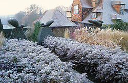 Frost in the Peacock Garden at Great Dixter with topiary, grasses and aster hedges - Aster lateriflorus 'Horizontalis'.