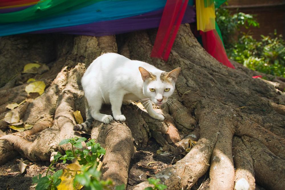 Cat at Wat Intharawihans Bangkok Thailand&#xA;<br />