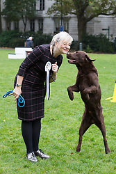 © Licensed to London News Pictures. 26/10/2017. LONDON, UK.  TRACEY BRABIN MP and her dog, Rocky at the Westminster Dog of the Year Competition held in Victoria Tower Gardens. The Westminster Dog of the Year Competition is organised jointly by the Kennel Club and the Dogs Trust..  Photo credit: Vickie Flores/LNP
