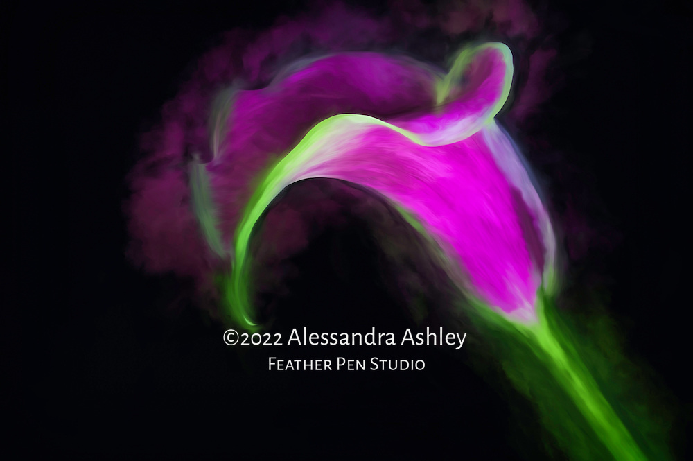 Fuchsia calla lily on black background, blended with paint effects.