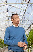 Italia, Toscana, Gavorrano, SFERA , l'azienda agricola a coltivazione idroponica più grande del sud Europa. Sfera is the largest hydroponic farm in southern Europe, focused on cooultivation of tomatoes and several kind of salads , including basel Luigi Galimmberti, founder of Sfera