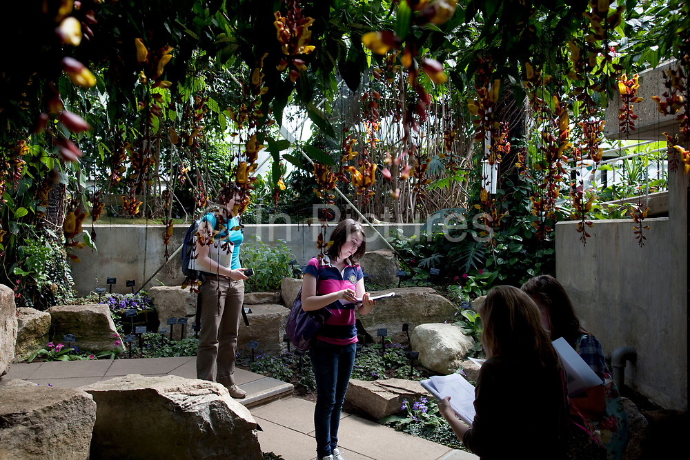 Interior of The Princess of Wales Conservatory. School children learning and drawing the plants. These glass houses contain many different zones including cacti, ferns, and orchids. The Royal Botanic Gardens, Kew, usually referred to simply as Kew Gardens, are 121 hectares of gardens  and botanical glasshouses between Richmond and Kew in southwest London, England. It is an internationally important botanical research and education institution with 700 staff, receiving around 2 million visitors per year.