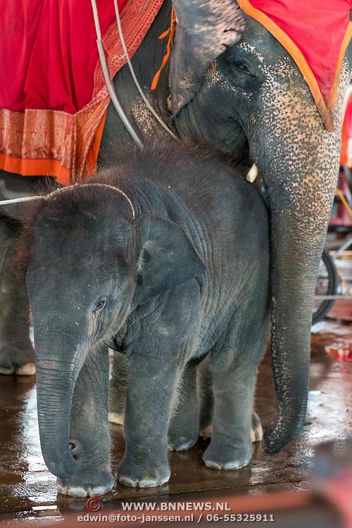 THA/Pattaya/20180722 - Vakantie Thailand 2018, olifant